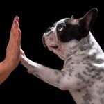 ドッグフードの変え方【愛犬のために知っておきましょう】